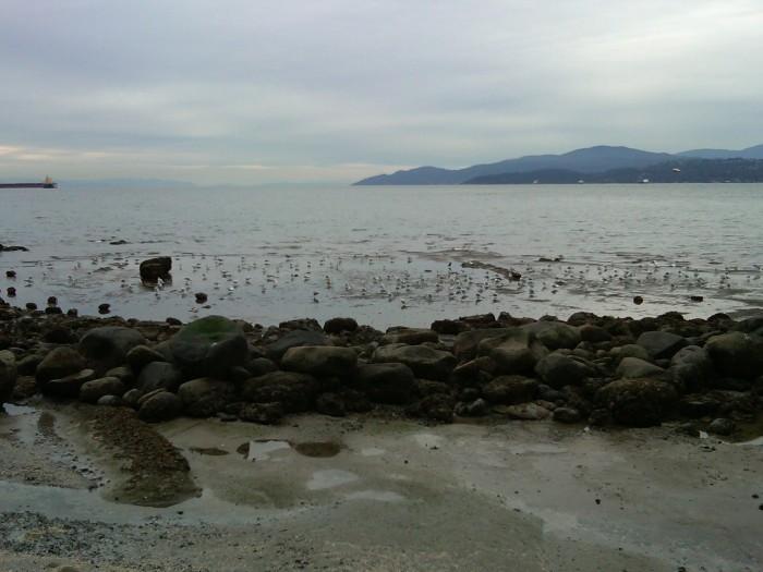 Where, in Caravaggio's Dagger, the narrows widen. Stanley Park, Vancouver, in the rain, 11 February 2015 (Photo: Hendrik Slegtenhorst)