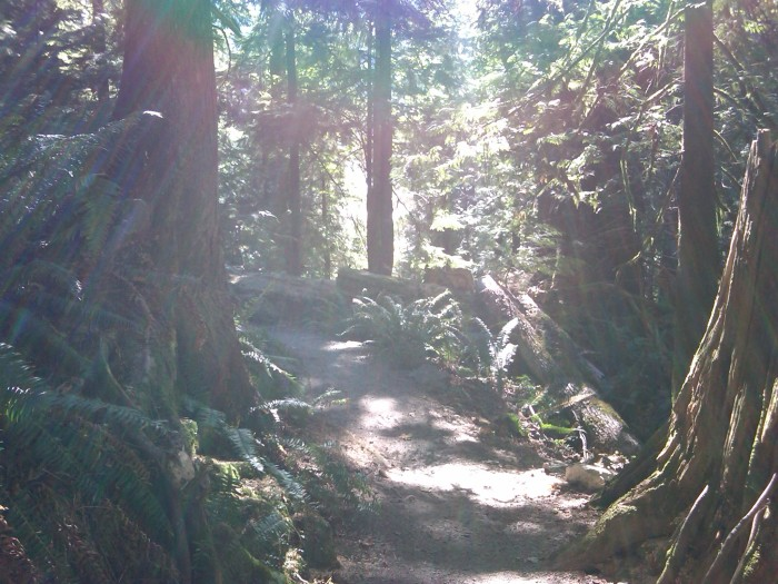 The Tristan und Isolde grove on the trail I often took round Killarney Lake on Bowen Island. I had for himself and his family named this grove, and another in Quarry Park, in memory and honour of a dear friend who died that October. 24 August 2010. (Photo: Hendrik Slegtenhorst)