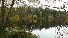 Lost Lagoon, Stanley Park, Vancouver, Canada. 8 November 2015. (Photo: Hendrik Slegtenhorst)