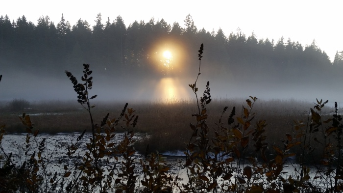 Beaver Lake, Stanley Park, Vancouver, Canada. 29 November 2015. (Photo: Hendrik Slegtenhorst)