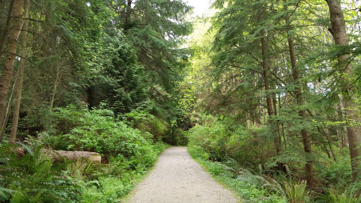 Spring Renewal, Tunnel Trail, Stanley Park, Vancouver