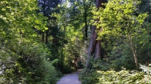 Thompson Trail, Stanley Park, Vancouver, Canada. 13 August 2016. (Photo: Hendrik Slegtenhorst)