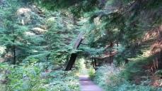 Lees Trail, Stanley Park, Vancouver (Photo: Hendrik Slegtenhorst)