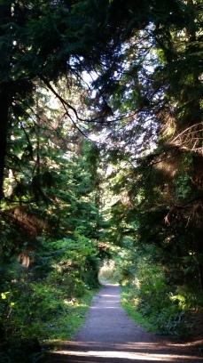 Tatlow Walk, Stanley Park, Vancouver (Photo: Hendrik Slegtenhorst)